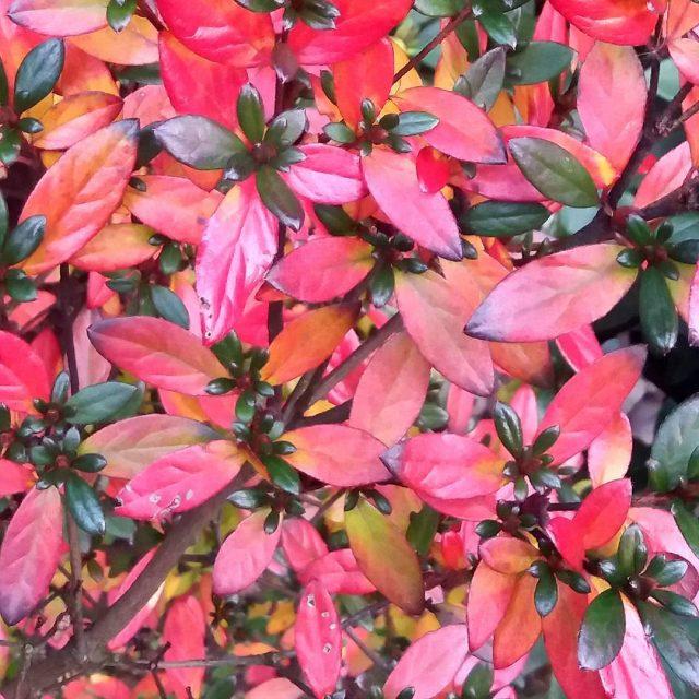 Jeszcze jesie zlotapolskajesien autumn november nature red colorful green ilovenaturehellip