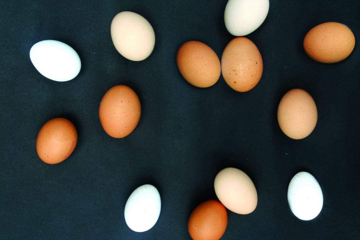eko jajka mali siłacze blog