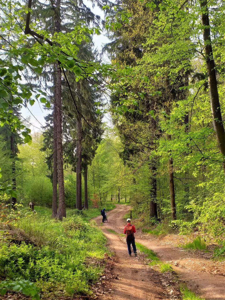szeroka bita ściezka w lesie, po obu stronach ścieżki drzewa liściaste i iglaste, na ścieżce stojący tyłem chłopiec z plecakiem, dalej mężczyzna z wózkiem crossowym